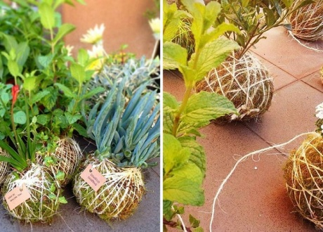 - Kokedama Workshop